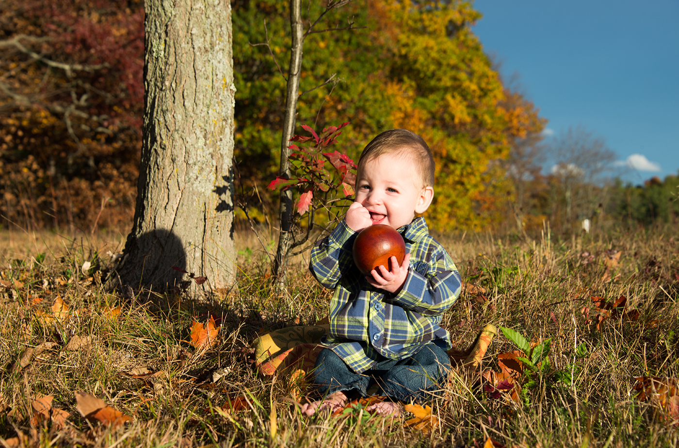 All Occasions Photography Albany NY - Family Photography Example 13 Apple Picking