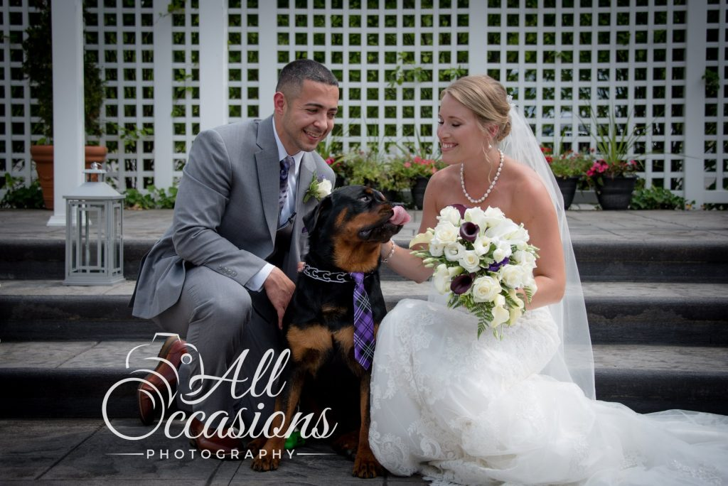 All Occasions Photography Albany NY - Wedding Photography Bride & Groom Petting Rottweiler Wearing Purple Plaid Tie